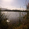 Almaden Lake & Trails : I had lived in various areas of San Jose for about 25 years when I moved to a neighborhood in one of the areas of town I was least familiar with. About 3 years after moving there I discovered this wonderful walk nearly on my doorstep. There are two trails tha lead from Almden Lake. The Los Alamitos trail heads toward the Santa Cruz Mts. and the Guadalupe Creek trail heads towards downtown San Jose (neither trail arrives at either location).